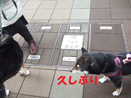 blog6637.jpg