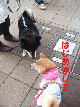 blog6638.jpg