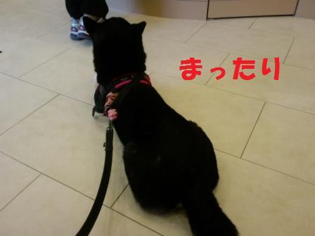 blog6658.jpg