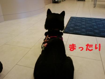 blog6713.jpg