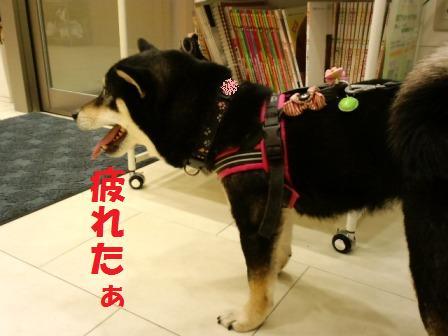 blog6714.jpg