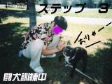 ss闘犬3