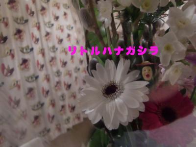 s003のコピー