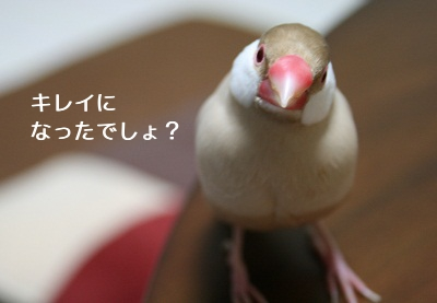 20110201_0557.jpg