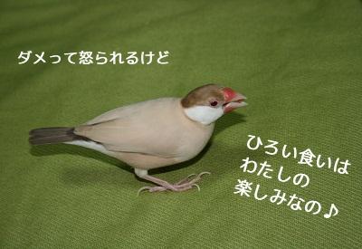 20110605_1238a.jpg
