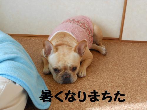 005-2009-10-11+020_convert_20111127235334.jpg