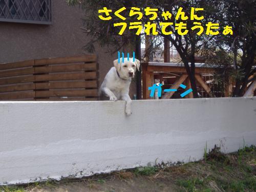 006_convert_20110311132432.jpg