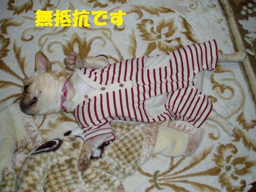 017_convert_20110306011912.jpg