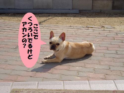 019_convert_20110208181503.jpg
