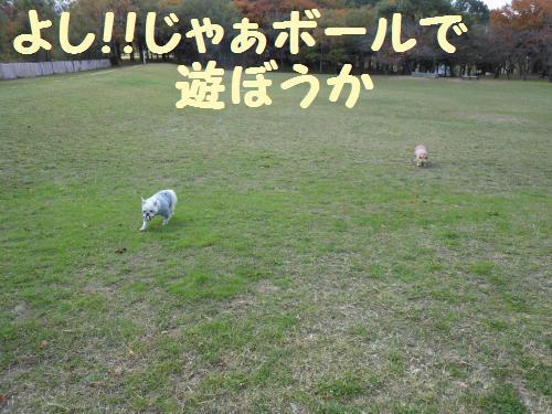11-2009-10-11+011_convert_20111127234620.jpg