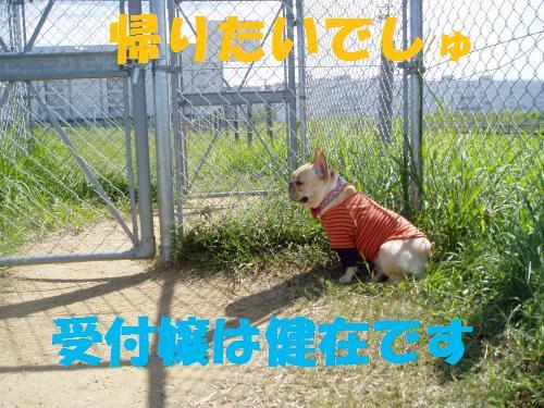 111_10convert_20111005232751.jpg