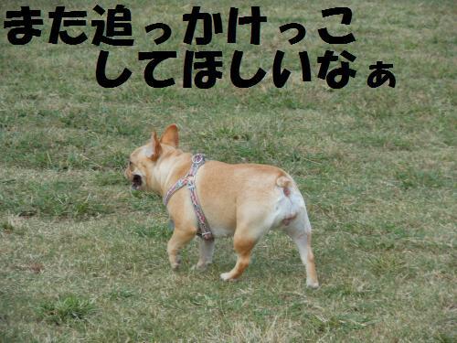 111_11convert_20111017221121.jpg