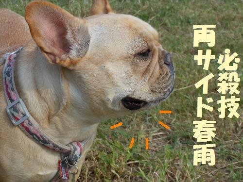 111_12convert_20111011000828.jpg