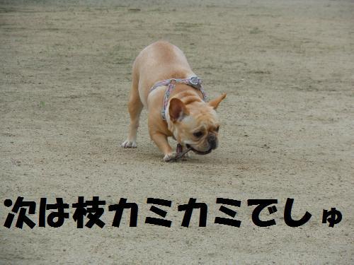 111_12convert_20111111233755.jpg