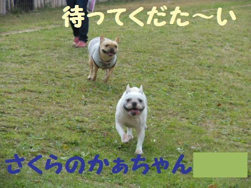 111_12convert_20111130230637.jpg