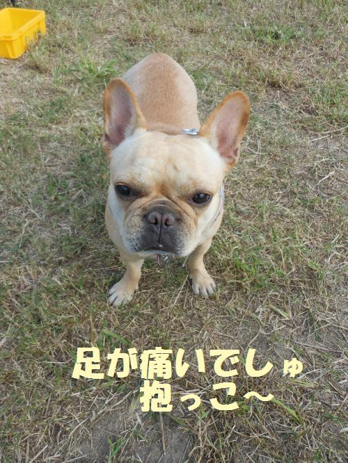 111_13convert_20111011000956.jpg
