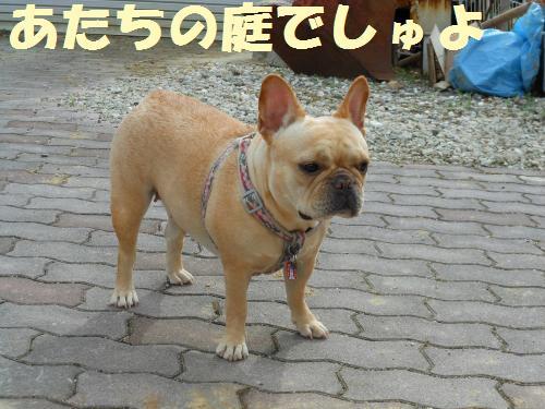 111_1convert_20111109022745.jpg