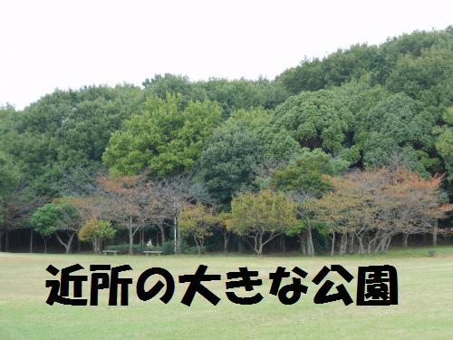 111_1convert_20111111233054.jpg