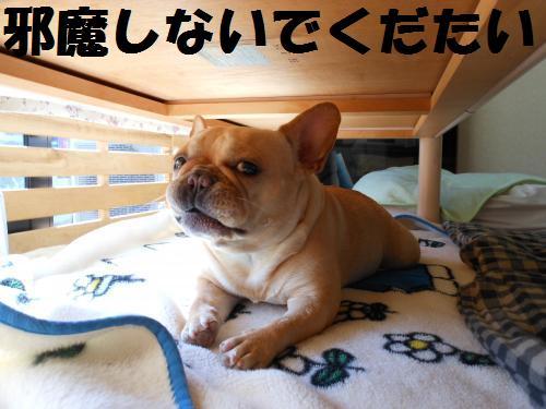 111_2convert_20111029020109.jpg