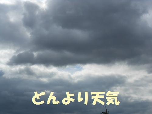 111_2convert_20111109022851.jpg