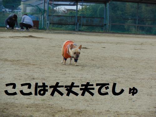 111_3convert_20111114002935.jpg