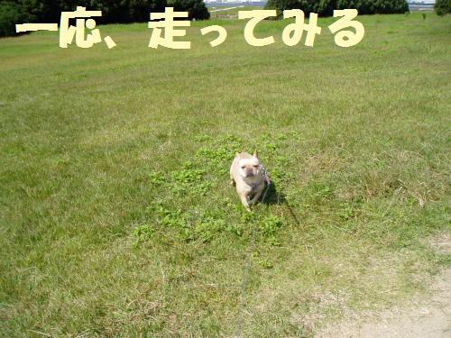 111_4convert_20111008011755.jpg