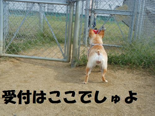 111_4convert_20111017220433.jpg