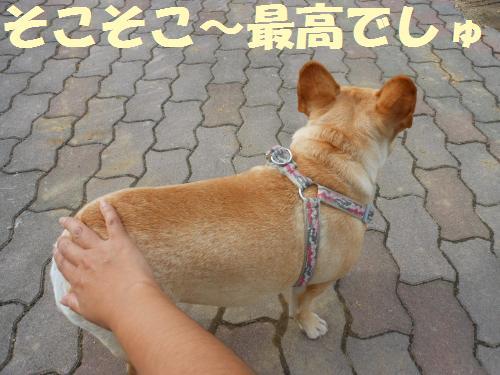 111_4convert_20111109023008.jpg