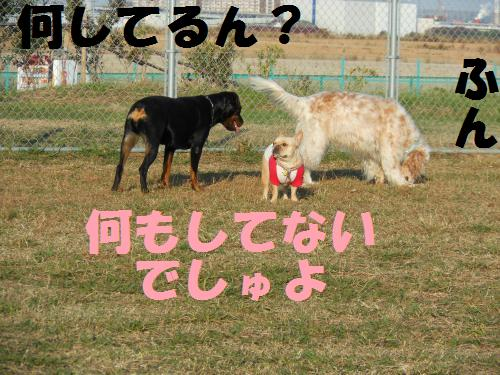 111_4convert_20111117003837.jpg