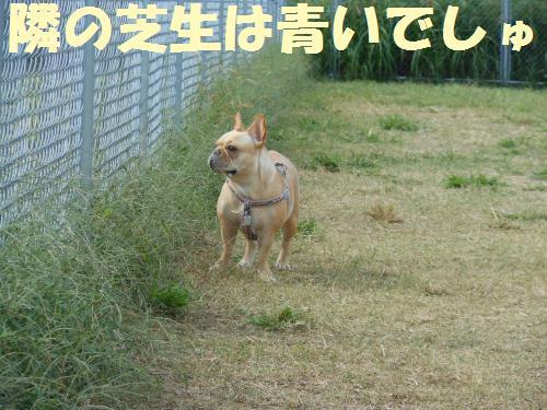 111_5convert_20111017220526.jpg