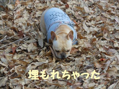 111_5convert_20111223030738.jpg