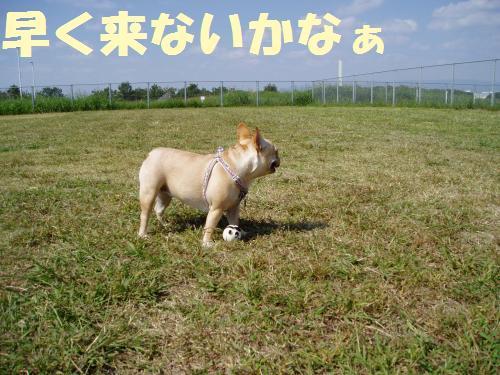 111_6convert_20111008011854.jpg