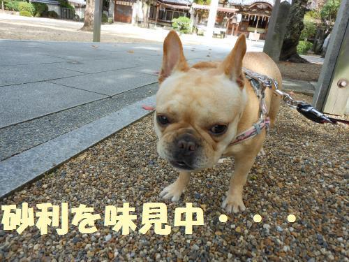 111_6convert_20111026002343.jpg