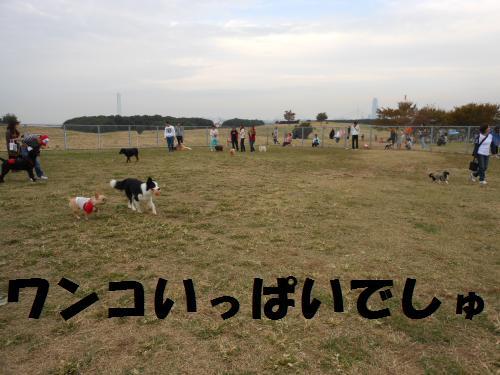 111_6convert_20111103230759.jpg