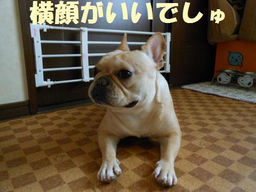 111_6convert_20111109023132.jpg
