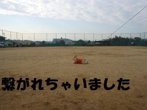 111_6convert_20111114003255.jpg