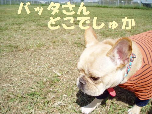 111_7convert_20111005232612.jpg