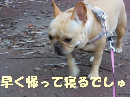 111_7convert_20111111233943.jpg