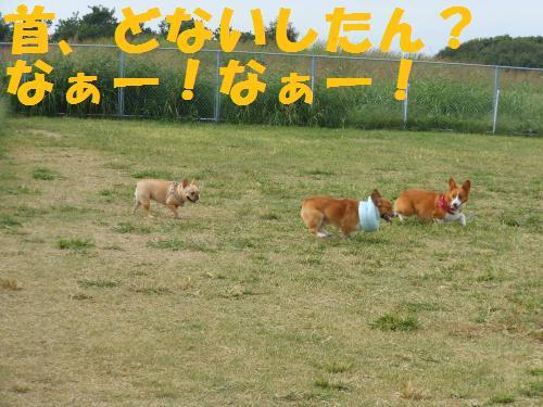 111_8convert_20111017220753.jpg