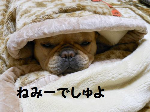111_8convert_20111123224836.jpg