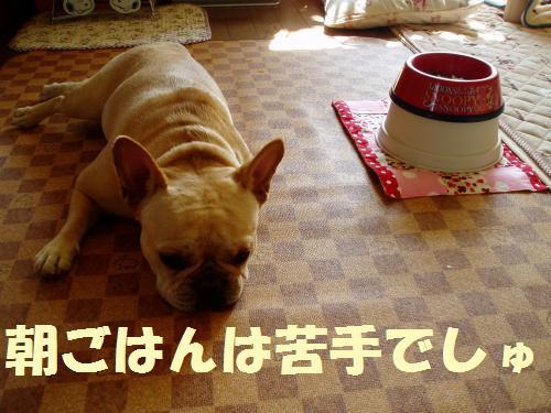 111_c15onvert_20110929234442.jpg
