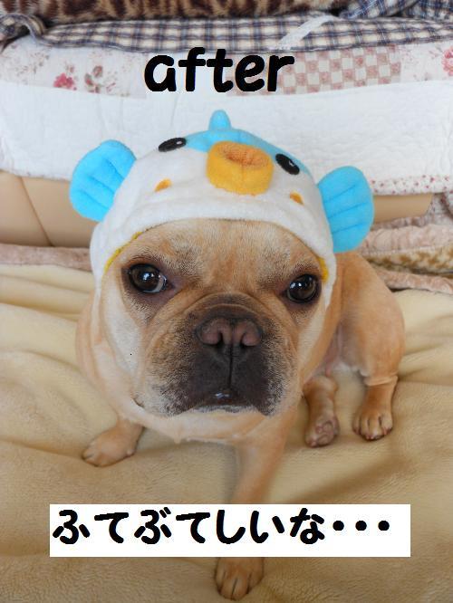 112_5convert_20111119001726.jpg