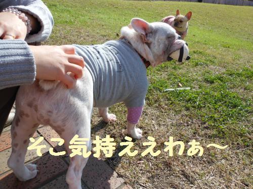 7-2009-10-11+007_convert_20111127234251.jpg