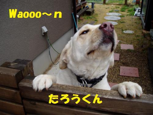 dc030714_convert_20110307192802.jpg