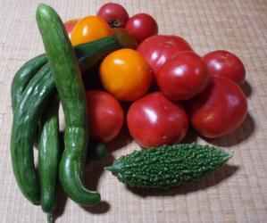 20100804夏野菜