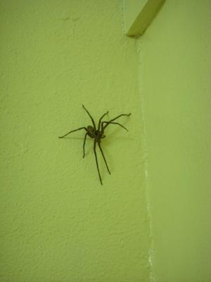 spider_convert_20111027102909.jpg
