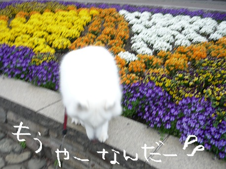P1090438.jpg