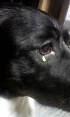 プリンの涙