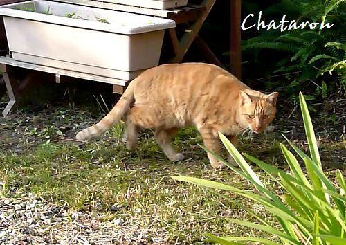chichibi230.jpg