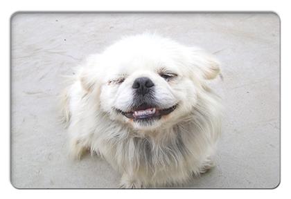 FC2_Chaina dog
